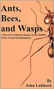 Ant and bee books amazon