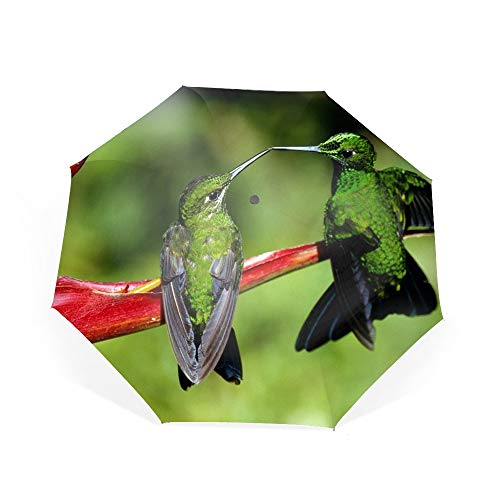 Automatic Compact Travel Umbrella with Reverse and Safe Lock Design, Teflon Auto Open Close Folding Strong Windproof Green Colibri Bird Couple Umbrella