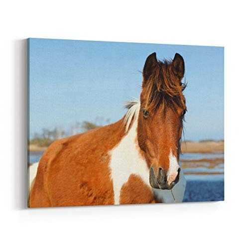 Rosenberry Rooms Canvas Wall Art Prints - Wild Horse at Chincoteague National Wildlife Refuge, Virginia, USA (48 x 32 inches)