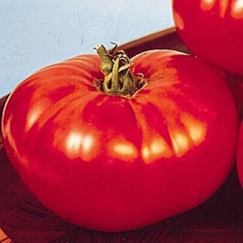 Big Beef Tomato 25 Seeds Early, Large Fruits, Heavy Yields, Disease Resistant ()