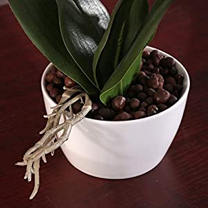 IMIEE Phaleanopsis Arrangement with Vase Decorative Artificial Orchid Flower Bonsai (Blue) 4