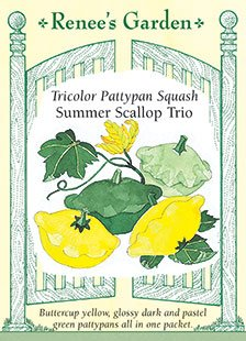 Squash - Summer Scallop Trio Seeds