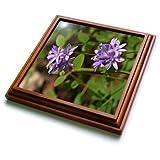 3dRose TDSwhite – Summer Seasonal Nature Photos - Floral Twin Blue Brodea Flowers - 8x8 Trivet with 6x6 ceramic tile (trv_284513_1)