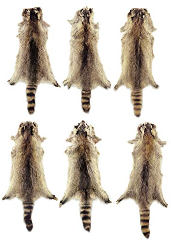 6 Pack AuSable Fur Tanned Raccoon Fur Pelt with Tail for sale  Delivered anywhere in USA