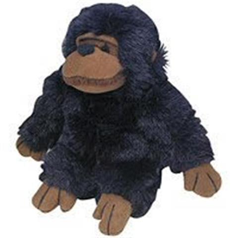 Pet Chimpanzee - 1