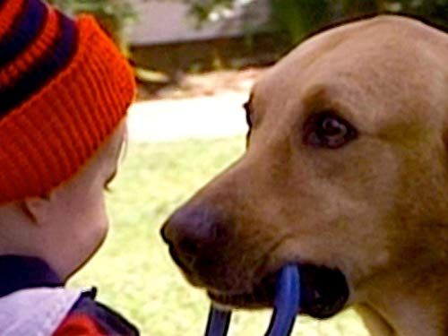 Its Condition - Cop Shot; Girls Survive Big Wave; Aussie Capsized; Deserted Baby Success; Dog Saves Boy
