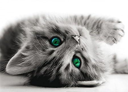 1art1 Gatos - Bright Green Eyes Póster Fotomural (160 x 115cm ...