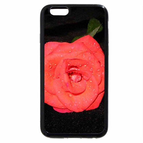 iPhone 6S / iPhone 6 Case (Black) My absolutely gorgeous coral colored rose.