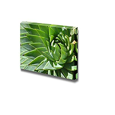 Canvas Prints Wall Art - Green Spiral Patterns of Spiky Aloe Leaves | Modern Wall Decor/Home Art Stretched Gallery Wraps Giclee Print & Wood Framed. Ready to Hang - 16