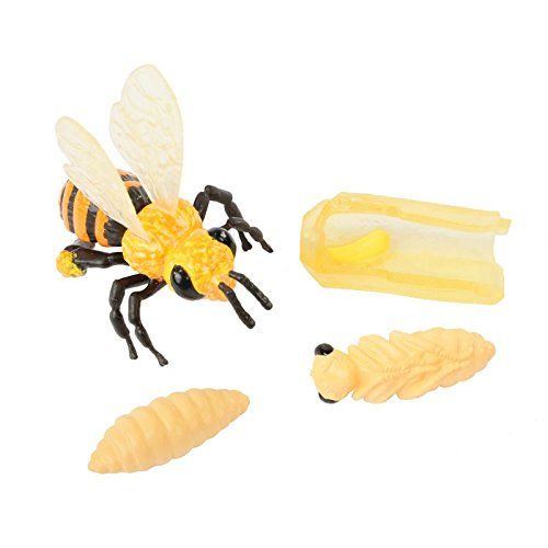Bee Life Cycle Toy – 4 Piece Set Shows Life Cycle Of A Honey Bee