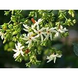 Creative Farmer Flower Packets Seeds Harsingar Flowers (Parijat) - Very Aromatic Plants Seeds Part Shade Flower Seeds Seeds Kitchen Garden Seeds Pack