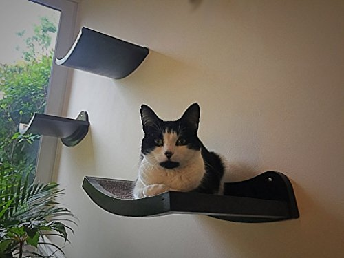 cat shelf modern curved wood wall mounted perch lowest prices rh cattree uk Floating Shelves Plans Cat House