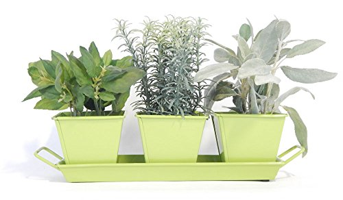 Indoor Herb Gardening Kit (Sherbet Green) - Grow Fresh Herbs Year Round