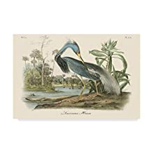 Trademark Fine Art Louisiana Heron Landscape by John James Audubon, 30x47-Inch