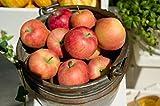 長野県産 りんご 加工用サンふじ 約5キロ 9-20玉