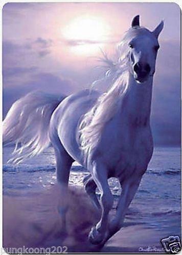 Classic White Horse fridge magnet 3