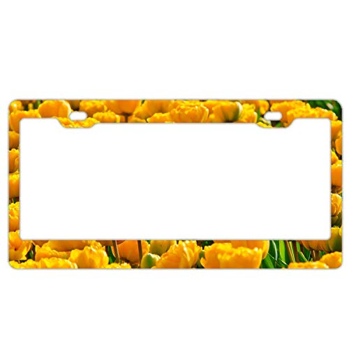 Chrome Frame Tulip (Yellow Tulip Field Spring License Plate Frame Funny Metal Car Tag Holder Fun, Thanksgiving Day Gifts, Black License Plate Frames)