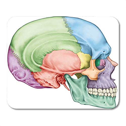 - Semtomn Gaming Mouse Pad The Bones of Cranium Head Skull Individual and Their 9.5