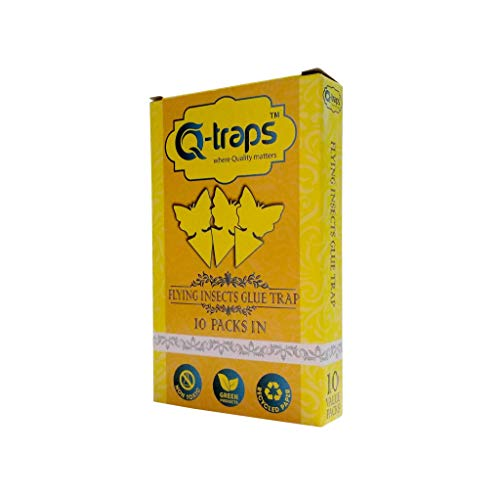 Buy gnat trap indoor butterfly trap