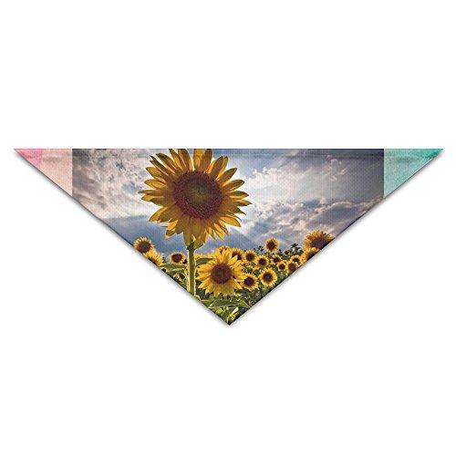sunflowers-with-sunrise-nature-view-dog-pets-bandana