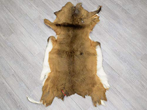 White Tail Deer Hide: #2 (39-02-G4000) L18