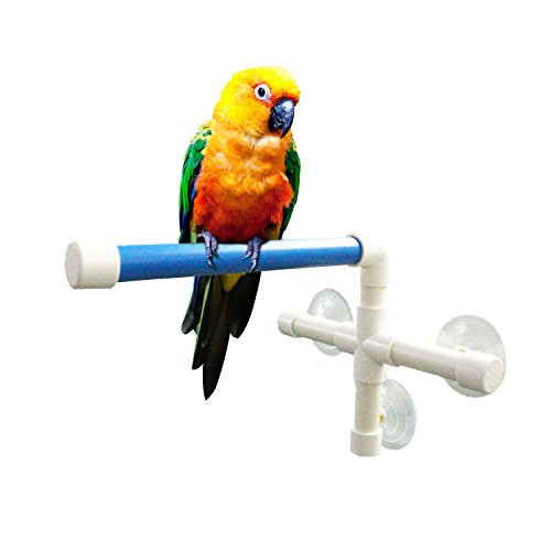 Window Parrot (Qulable Shower Bird Perch, Portable Suction Cup Parrot Toy Fold Away Window Stand Toys for Small Medium Birds)