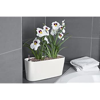 Amazon.com : Windowsill Self-Watering Planter - White : Garden ...
