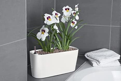 Windowsill Self Watering Planter   White