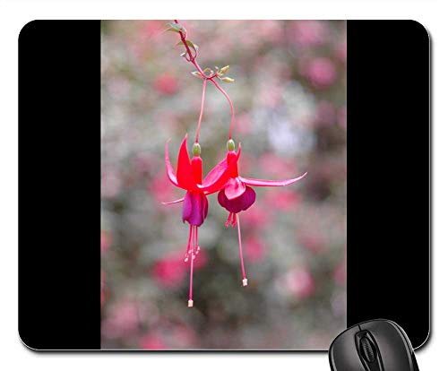 - Mouse Pad - Fuchsia Angel Earrings Cascading Plants Plants