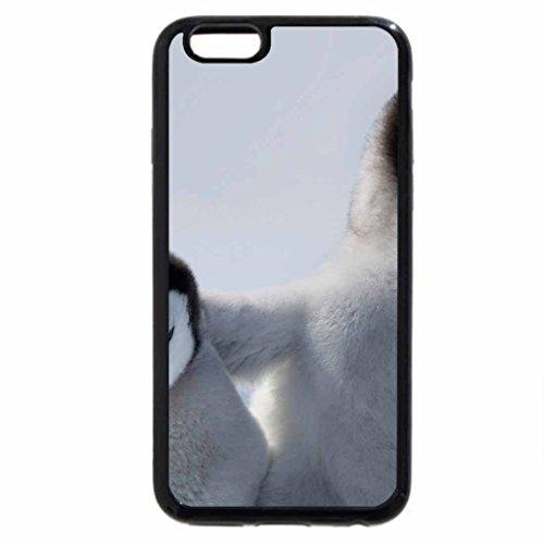 iPhone 6S / iPhone 6 Case (Black) Penguin