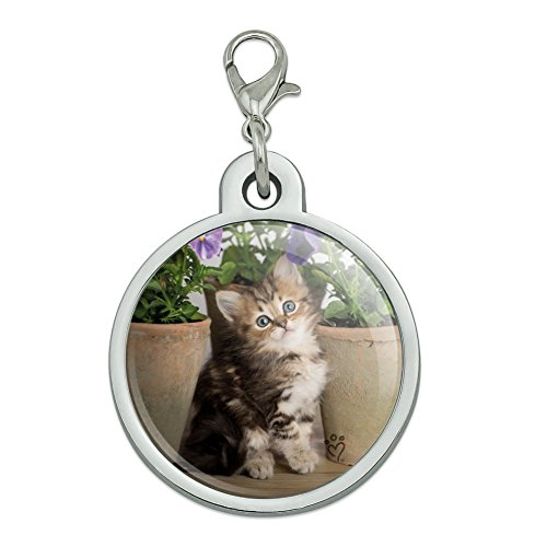 (Graphics and More Ragdoll Tiffany Kitten Cat Flower Pots Chrome Plated Metal Pet Dog Cat ID Tag - Large)