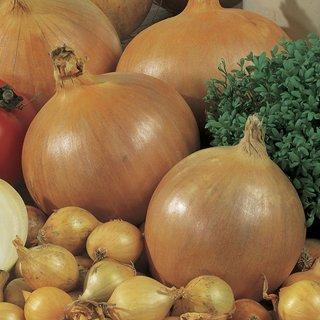 Onion Sets, Super Sweet Onions, 1 Lb Pack.