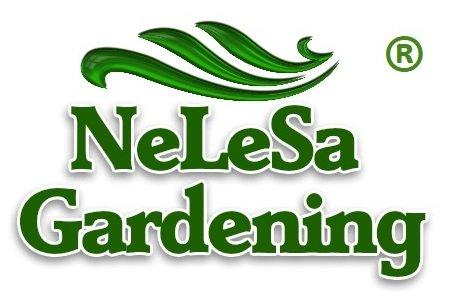 Nelesa Gardening Live Rubber Plant House Plant