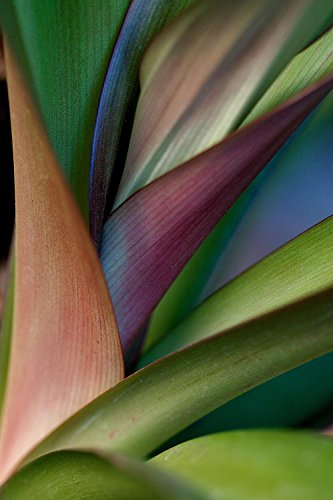 (Bird of Paradise Wallpaper Wall Mural - Self-Adhesive - Multiple Sizes - National Geographic Image from Magic Murals)