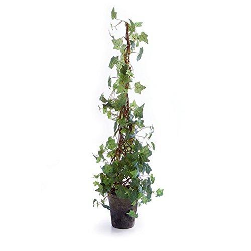 (Napa Home & Garden Ivy 42