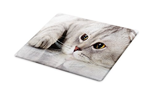 Lunarable Cat Cutting Board, Fluffy Kitty Natural Beauty Scottish Fold Domestic Feline Best Friend Cute Artful Photo Print, Decorative Tempered Glass Cutting and Serving Board, Small Size, Grey