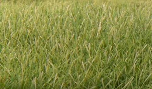 Woodland Scenics FS626 stehendes Gras 12mm mittelgrün
