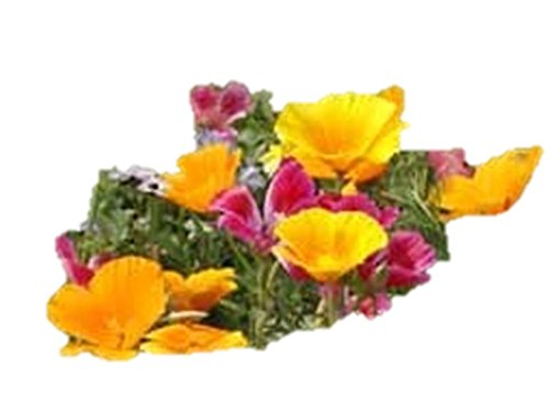 California West Coast Regional Wildflower Mix Seeds Blend ST07 (170,000 Seeds, or 1/2 LB)