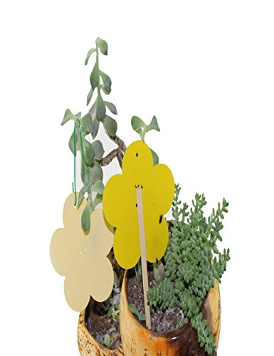 ZOORE Yellow Sticky Traps, Dual Sided Glue Flying Bug Catcher For Indoor Houseplant, Organic Garden, Outdoor Greenhouse & More - Eco Friendly Non Toxic Flower Shape (20Pack) by ZOORE
