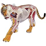 No.21 tiger anatomy model three-dimensional puzzle 4D VISION animal anatomy (japan import)