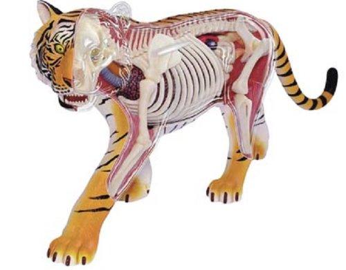 青島文化教材社 スカイネット 立体パズル 4D VISION VISION 動物解剖 解剖モデル No.21 虎 解剖モデル No.21 B00BWJRS08, co100percent:e7e94866 --- m2cweb.com