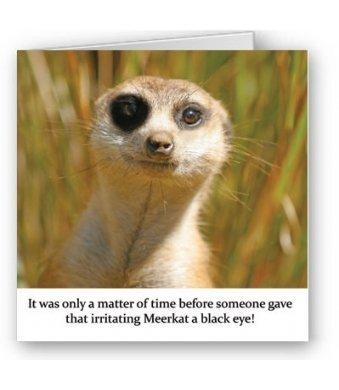 Humorous Birthday Blank Card Meerkat With Black Eye Amazon
