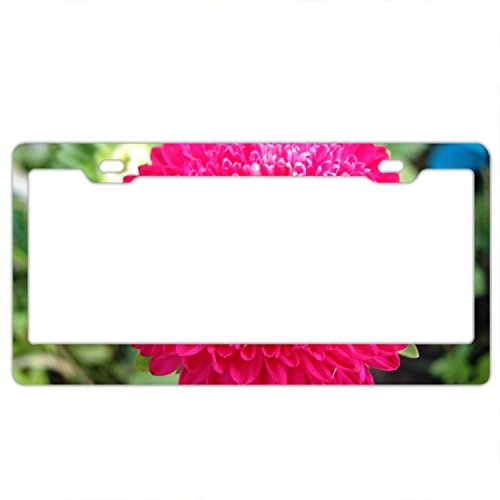 YEX Abstract Chrysanthemum Wallpaper License Plate Frame Car Tag Frame Auto License Plate Holder 12