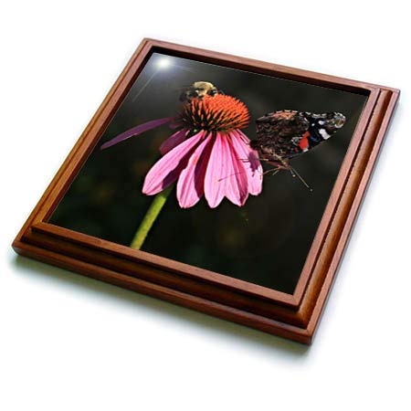 3dRose Stamp City - nature - Photo of a carpenter bee and painted lady butterfly on a coneflower. - 8x8 Trivet with 6x6 ceramic tile (trv_308701_1)