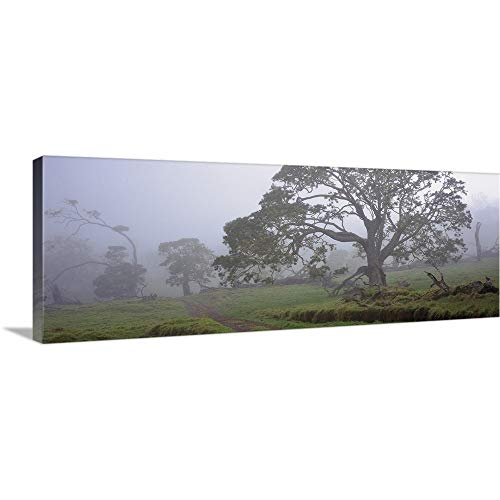 GREATBIGCANVAS Gallery-Wrapped Canvas Entitled Koa Trees on a Landscape, Mauna Kea, Mana Road, Big Island, Hawaii by 90