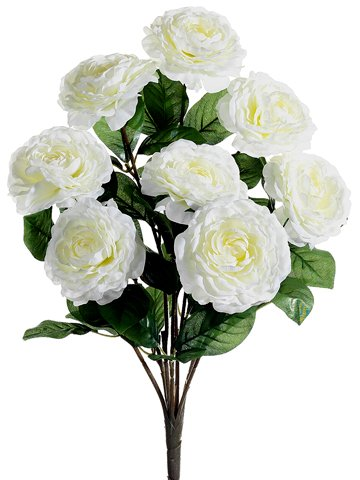 19-Camellia-Bush-x8-White-Pack-of-12