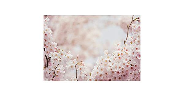 CdHBH 5x7ft Spring Cherry Blossom Sweet Tree Photo Studio Studio Photography Photography Props Wallpaper Home Decoration Vinyl Material Festival Venue Party Layout