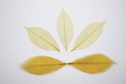 ChangThai Design 100Yellow اسکلت برگ لاستیکی درخت جلوی کتابچه راهنمای طبیعی عروسی DIY کارت عروسی