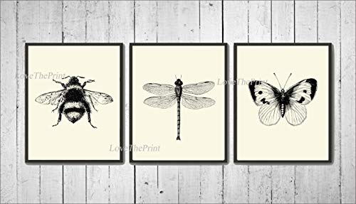 Bee Dragonfly Butterfly Wall Art Prints set of 3 Prints 8x10 - Unframed - Beautiful Black and White Illustration Ivory Natural Background Home Room Decor