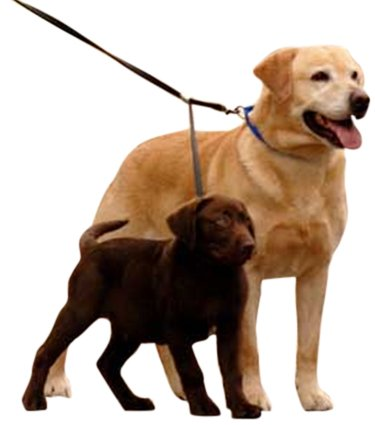 Sporn Double Dog Leash – Two Dog Leash Med- XL, black, My Pet Supplies
